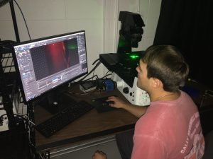 Student taking fluorescent microscopy images